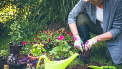 Garden Mistakes and How To Avoid Them
